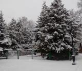Tols-zima